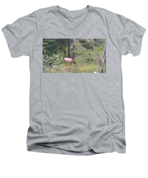 Men's V-Neck T-Shirt featuring the photograph Young Elk Grazing by Fortunate Findings Shirley Dickerson