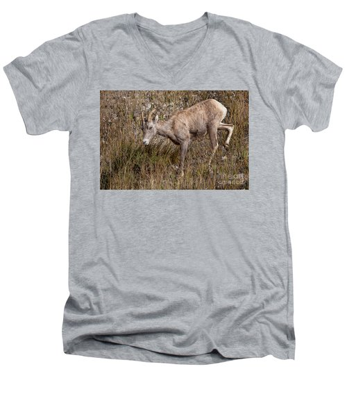 Bighorn Ewe Men's V-Neck T-Shirt