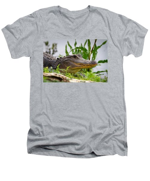 Alligator Men's V-Neck T-Shirt