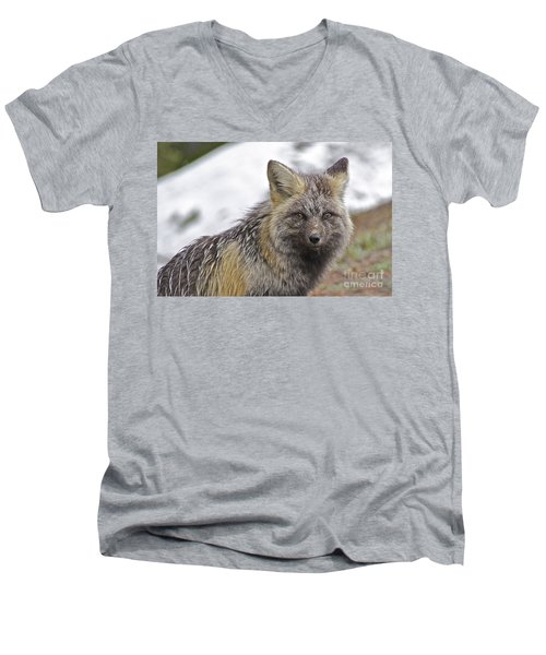 Men's V-Neck T-Shirt featuring the photograph Cascade Red Fox by Sean Griffin