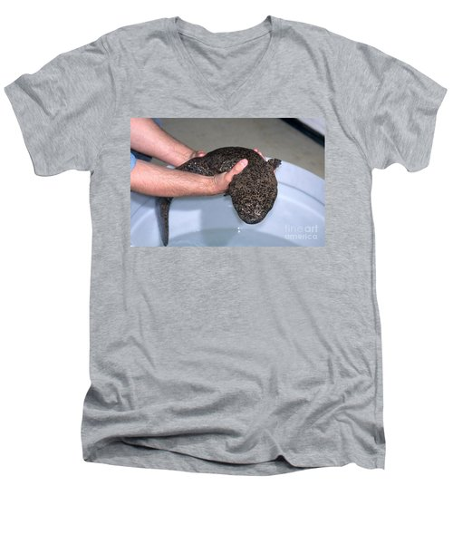 Chinese Giant Salamander Men's V-Neck T-Shirt by Dante Fenolio