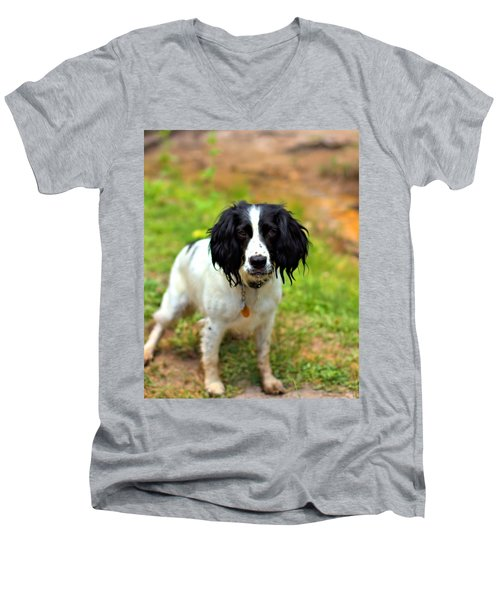 Spaniel Men's V-Neck T-Shirt by Marlo Horne