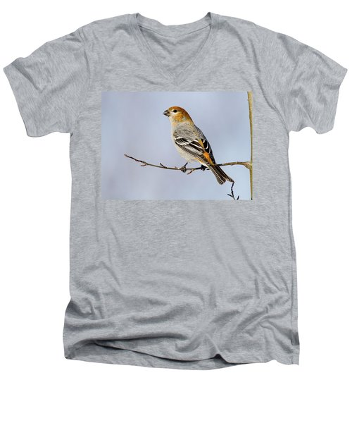 Female Pine Grosbeak Men's V-Neck T-Shirt