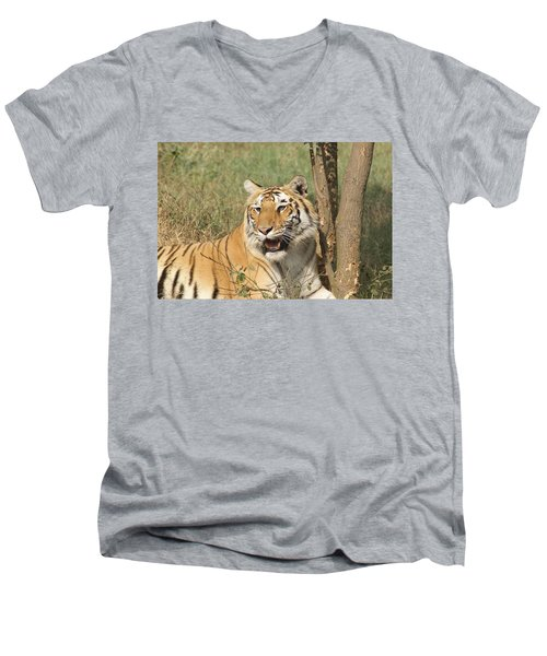 A Tiger Lying Casually But Fully Alert Men's V-Neck T-Shirt
