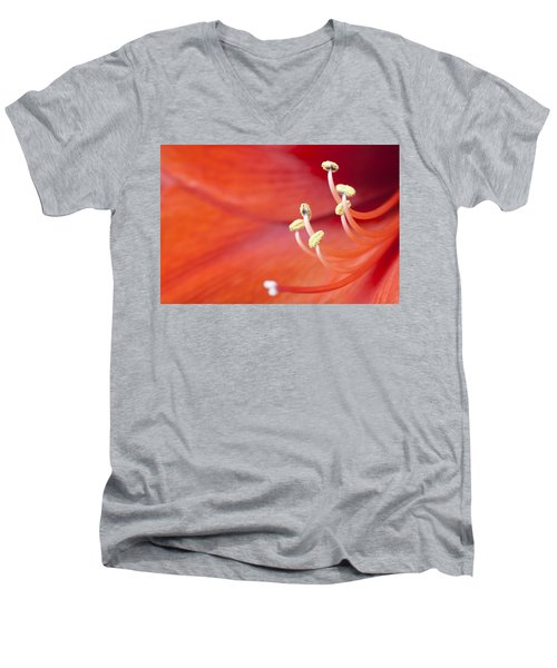 Amaryllis Bloom Men's V-Neck T-Shirt