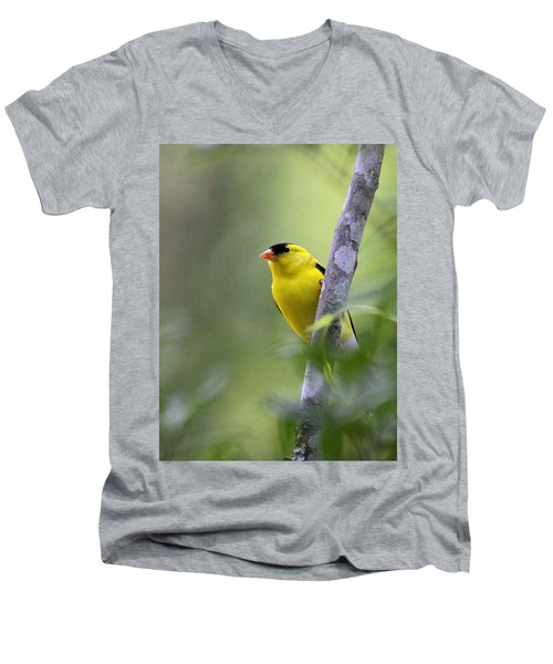 American Goldfinch - Peaceful Men's V-Neck T-Shirt