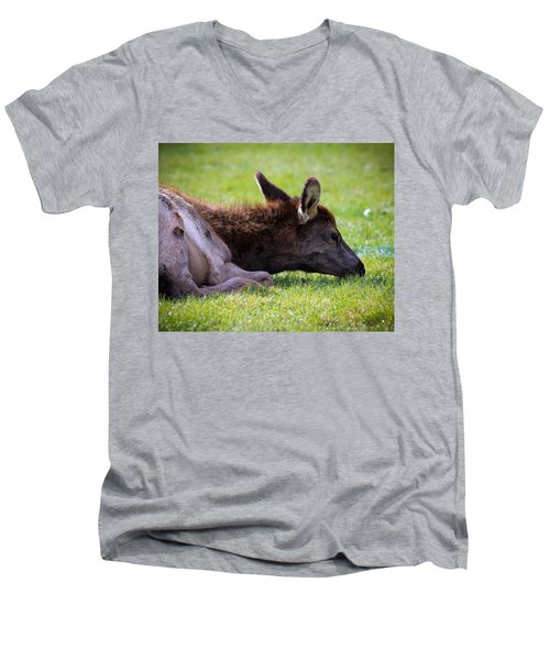 Men's V-Neck T-Shirt featuring the photograph Baby Elk by Steve McKinzie