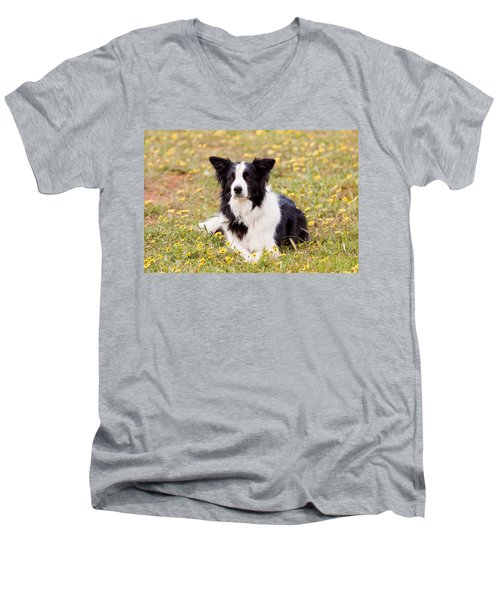 Border Collie In Field Of Yellow Flowers Men's V-Neck T-Shirt