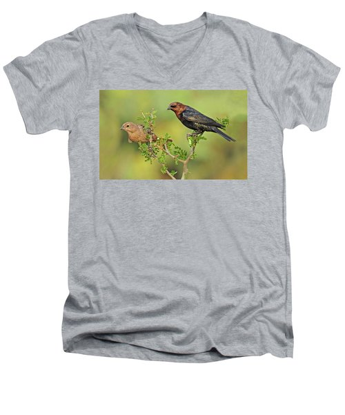 Brown Headed Cowbird Pair Men's V-Neck T-Shirt