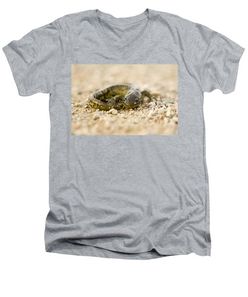 Close Up Tiger Salamander Men's V-Neck T-Shirt by Mark Duffy