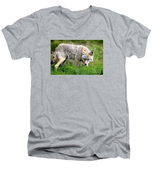 Men's V-Neck T-Shirt featuring the photograph Coyote On The Prowl by Kathy  White