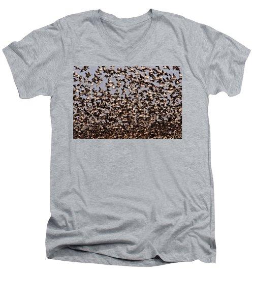 Duck Wall Men's V-Neck T-Shirt