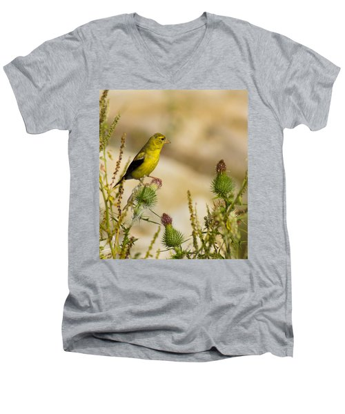 Goldfinch On Lookout Men's V-Neck T-Shirt