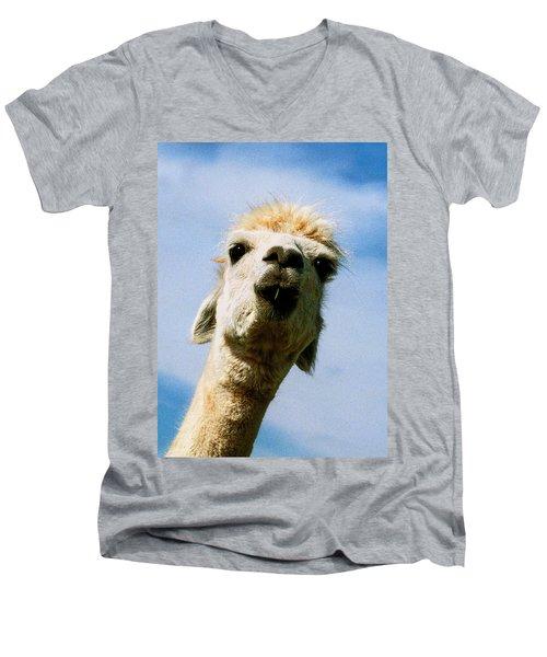 Llama Men's V-Neck T-Shirt