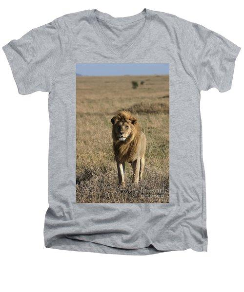 Male Lion's Gaze Men's V-Neck T-Shirt by Darcy Michaelchuk