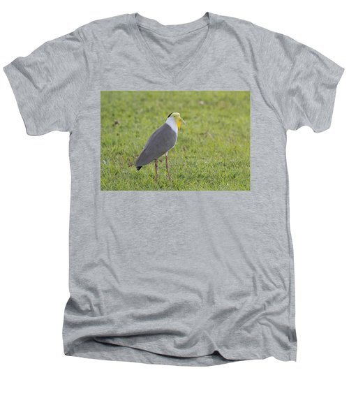 Masked Lapwing Men's V-Neck T-Shirt by Douglas Barnard