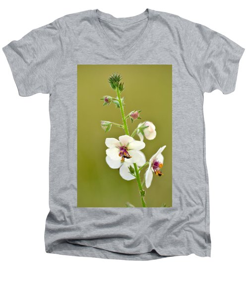 Men's V-Neck T-Shirt featuring the photograph Moth Mullein by JD Grimes