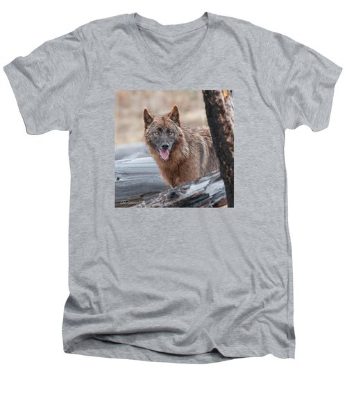 The Lone Wolf Men's V-Neck T-Shirt by CR  Courson