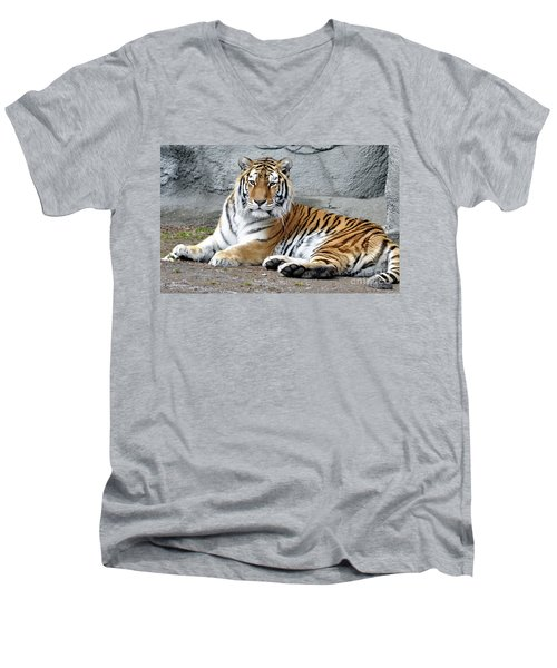 Tiger Resting Men's V-Neck T-Shirt