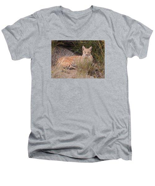 Bobcat At Rest Men's V-Neck T-Shirt