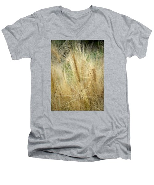 Foxtail Barley Men's V-Neck T-Shirt by Jouko Lehto