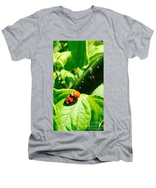 Ladybugs In Love - No. 2016 Men's V-Neck T-Shirt