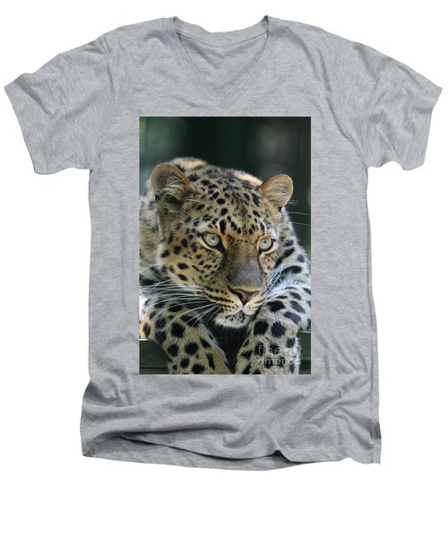 Amur Leopard #2 Men's V-Neck T-Shirt