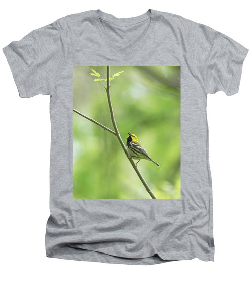 Black-throated Green Warbler Men's V-Neck T-Shirt