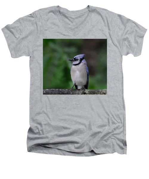 Blue Jay Men's V-Neck T-Shirt by Diane Giurco