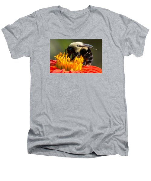 Bumble Bee Men's V-Neck T-Shirt