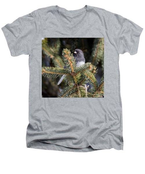 Dark-eyed Junco Men's V-Neck T-Shirt