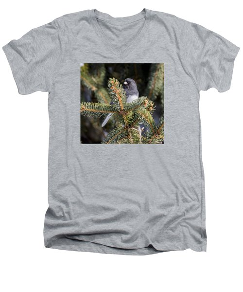 Dark-eyed Junco Men's V-Neck T-Shirt