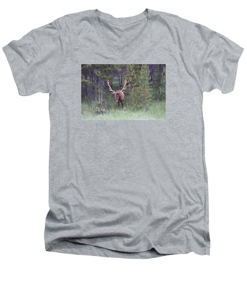 Bull Elk Rocky Mountain Np Co Men's V-Neck T-Shirt