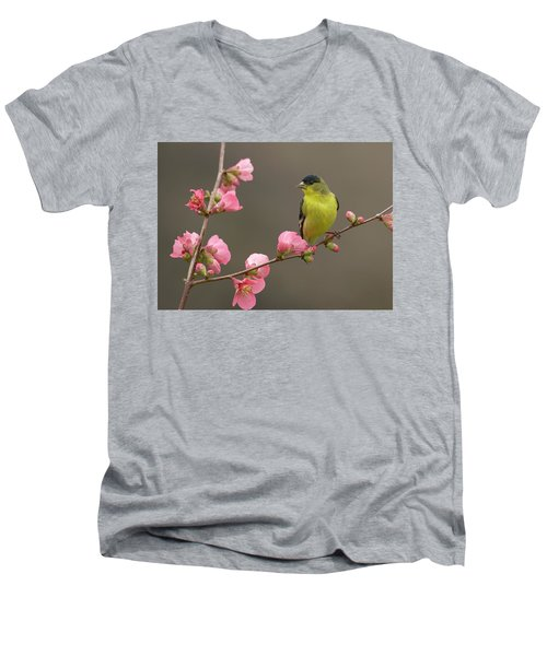 Men's V-Neck T-Shirt featuring the photograph Lesser Goldfinch by Doug Herr