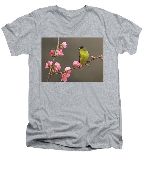 Lesser Goldfinch Men's V-Neck T-Shirt