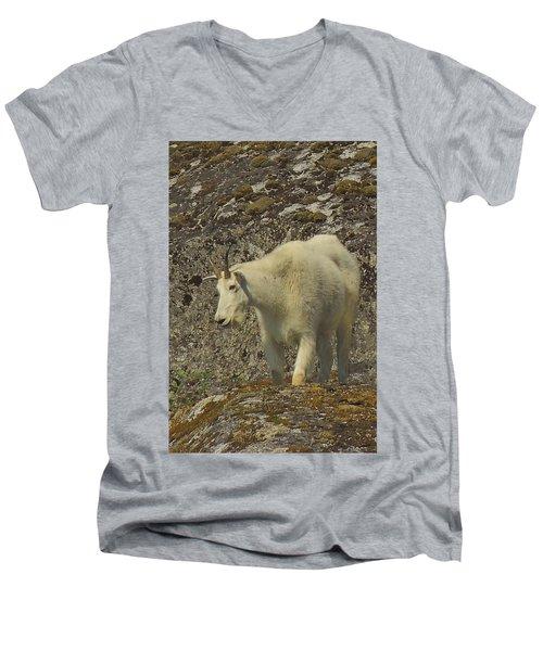Mountain Goat Ewe Men's V-Neck T-Shirt