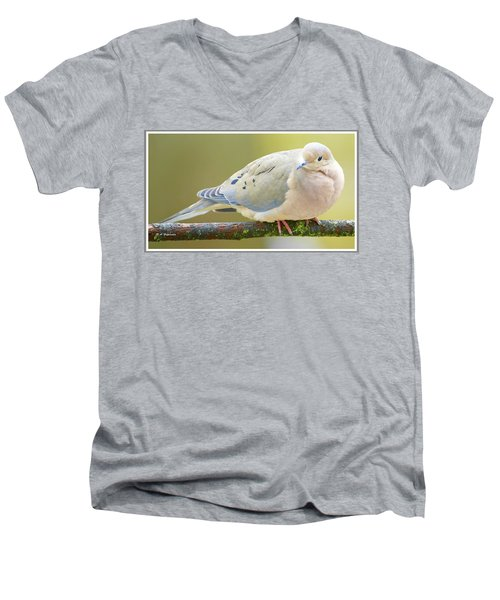 Mourning Dove On Tree Branch Men's V-Neck T-Shirt