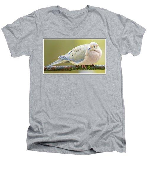 Mourning Dove On Tree Branch Men's V-Neck T-Shirt