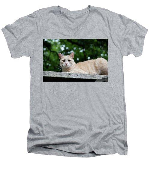 Orange Tabby Men's V-Neck T-Shirt