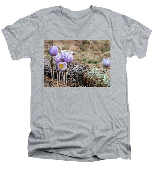 Pasque Flower Men's V-Neck T-Shirt