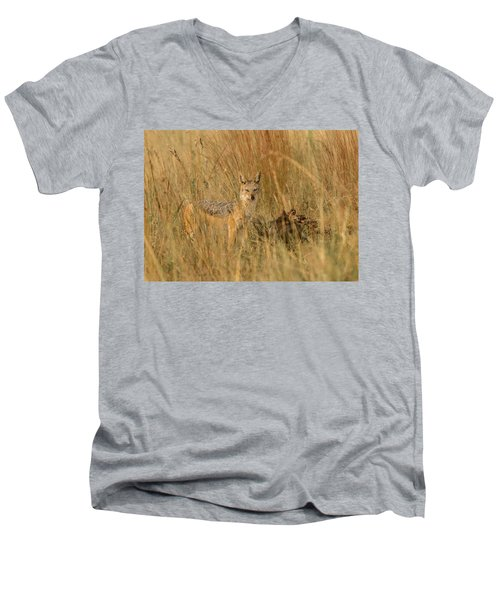 Silver Backed Jackal Men's V-Neck T-Shirt by Patrick Kain