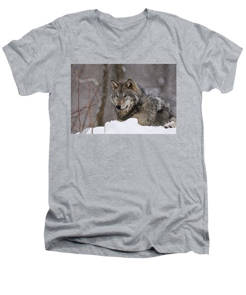 Timber Wolf In Winter Men's V-Neck T-Shirt