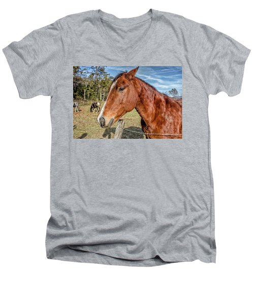 Men's V-Neck T-Shirt featuring the photograph Wild Horse In Smoky Mountain National Park by Peter Ciro