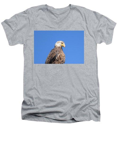 Bald Eagle Juvenile Perched Men's V-Neck T-Shirt