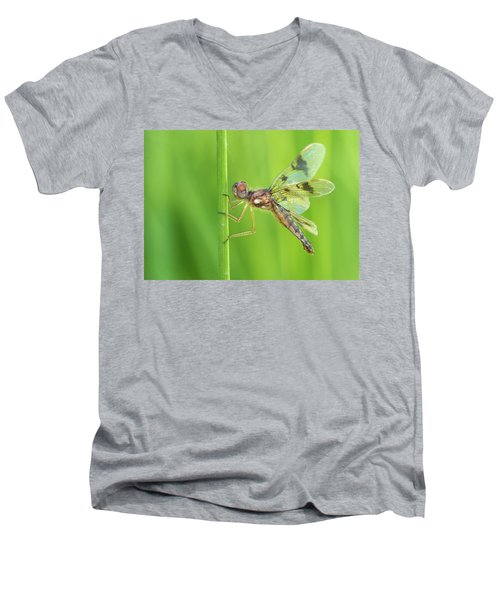 Eastern Amberwing Men's V-Neck T-Shirt