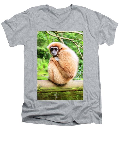 Men's V-Neck T-Shirt featuring the photograph Lar Gibbon by Alexey Stiop