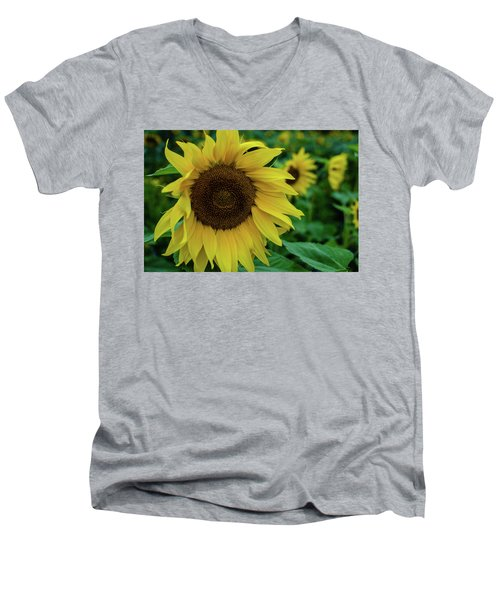 Sunflower Fields Men's V-Neck T-Shirt by Miguel Winterpacht