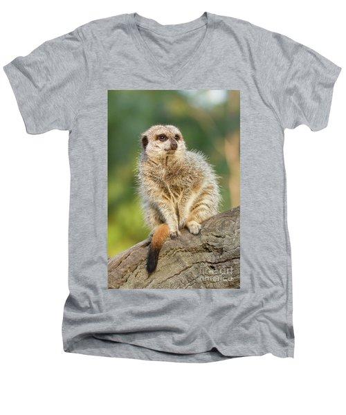 Meerkat Men's V-Neck T-Shirt by Craig Dingle