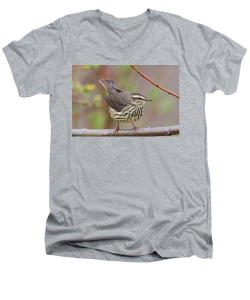 Northern Waterthrush Men's V-Neck T-Shirt