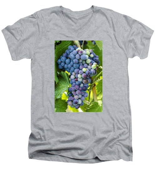 Red Wine Grapes Men's V-Neck T-Shirt by Teri Virbickis